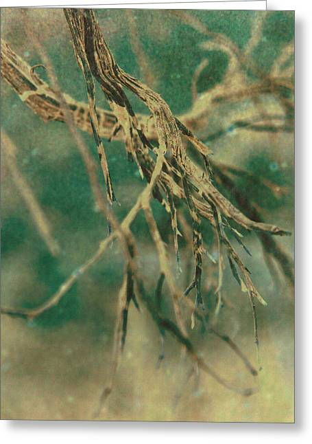 Tree Roots Greeting Cards - Organic Greeting Card by Mark  Ross