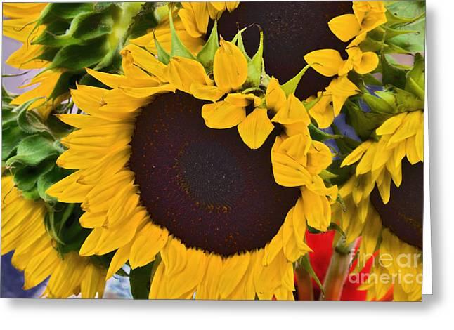 Close Focus Floral Greeting Cards - Organic Sunflowers     Greeting Card by Alexandra Jordankova