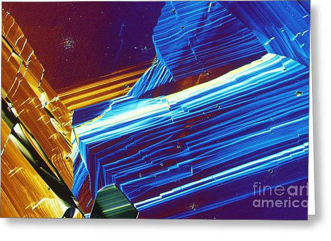 Light Microscopy Greeting Cards - Organic Superconductor Greeting Card by Michael W. Davidson