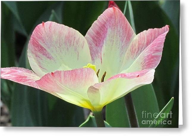 Oriental Beauty Greeting Card by Jackie Popp