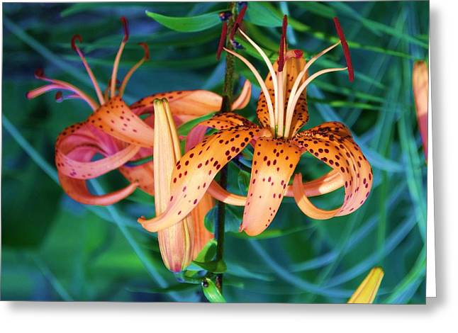Oriental Tiger Greeting Cards - Oriental Lily 2 Greeting Card by Dave Dresser