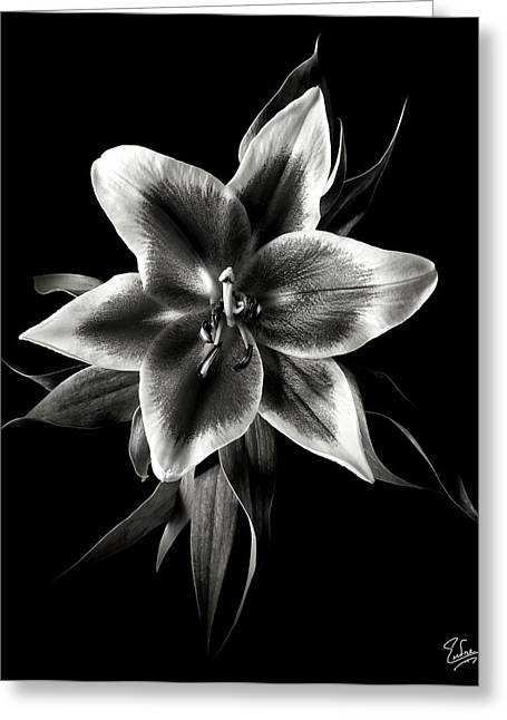 Flower Photos Greeting Cards - Oriental Lily in Black and White Greeting Card by Endre Balogh