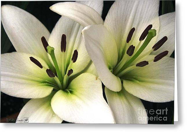 Jem Fine Arts Greeting Cards - Oriental Lily named Endless Love Greeting Card by J McCombie