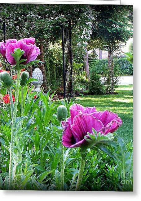 Searcy Greeting Cards - Oriental Poppies Greeting Card by Tanya  Searcy