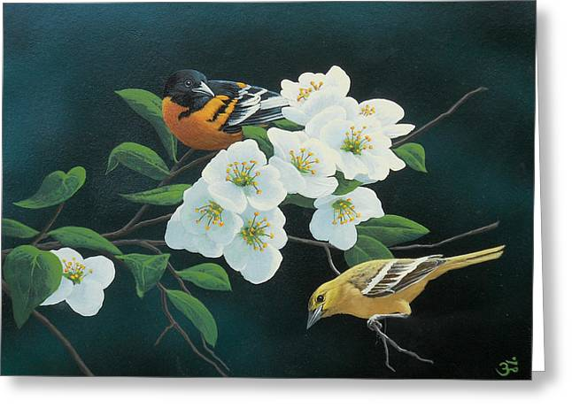 Baltimore Oriole Greeting Cards - Orioles Greeting Card by Mark Mittlesteadt
