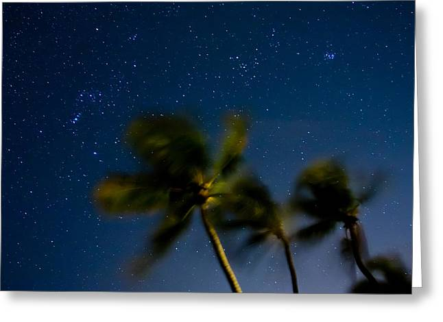 Constellations Photographs Greeting Cards - Orion and Windswept Palms Greeting Card by Adam Pender