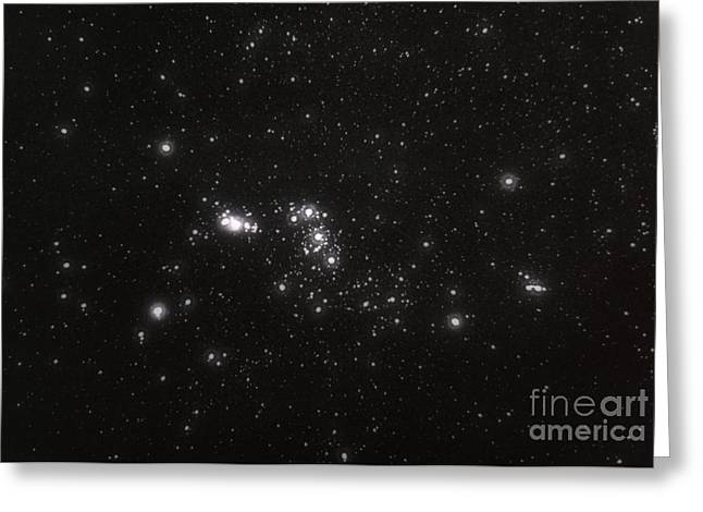 Constellations Greeting Cards - Orion Greeting Card by Science Source