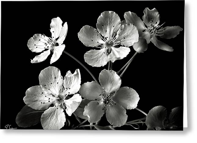 Flower Photos Greeting Cards - Ornamental Pear in Black and White Greeting Card by Endre Balogh