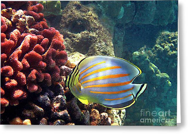 Reef Fish Greeting Cards - Ornate Butterflyfish on the Reef Greeting Card by Bette Phelan