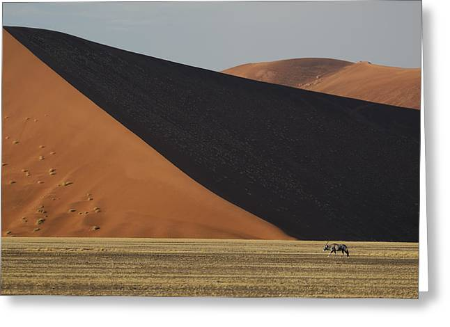 Hardap Region Greeting Cards - Oryx and Dunes Greeting Card by Christian Heeb