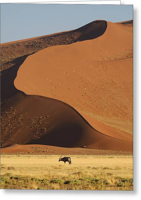 Sossusvlei Area Greeting Cards - Oryx II Greeting Card by Christian Heeb