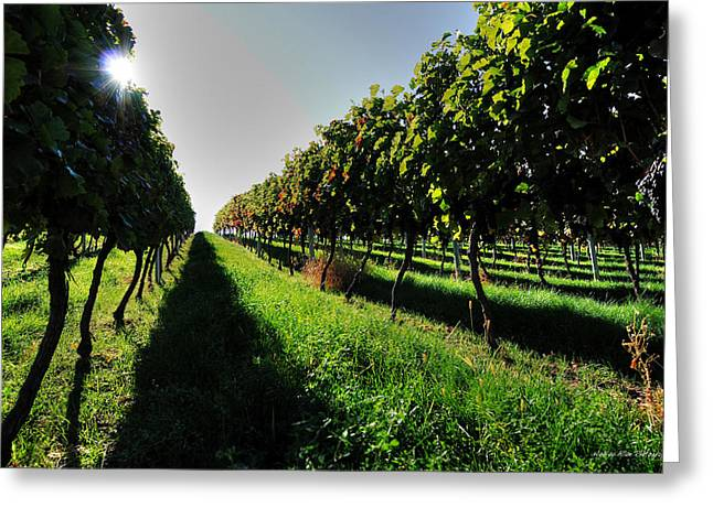 Wesley Allen Photography Greeting Cards - Osoyoos Vineyard Greeting Card by Wesley Allen Shaw