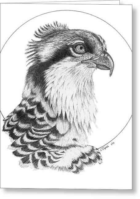 Osprey Drawings Greeting Cards - Osprey Greeting Card by Lawrence Tripoli