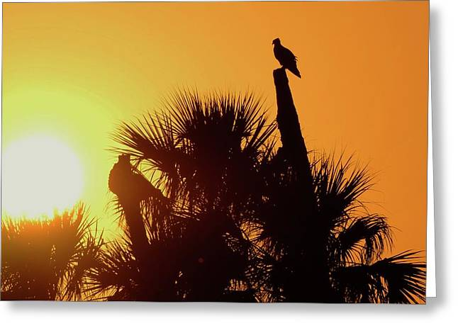 St. Lucie River Greeting Cards - Osprey Sunset Greeting Card by Don Youngclaus