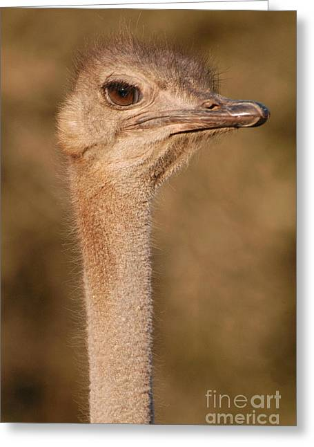 Ostrich Greeting Cards - Ostrich head Greeting Card by Andy Smy