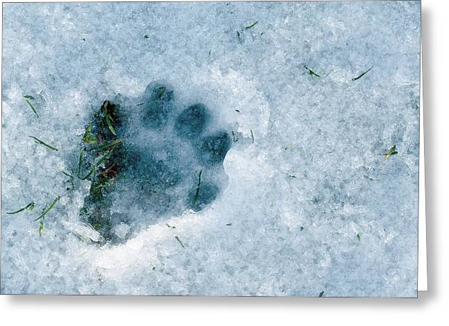 Otter Footprint In Snow Greeting Card by Duncan Shaw