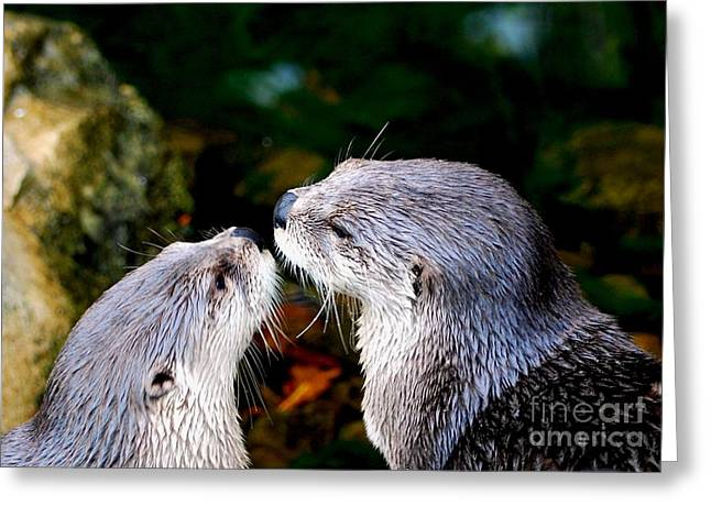Wildlife Celebration Greeting Cards - Otter Love Greeting Card by C  Lythgo