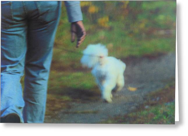 Dog Walking Greeting Cards - Out for a Stroll Greeting Card by Karol  Livote