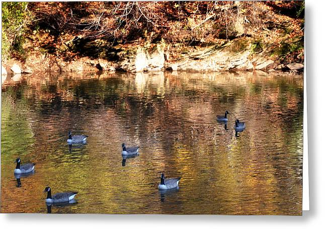 Out for a Swim Greeting Card by Bill Cannon