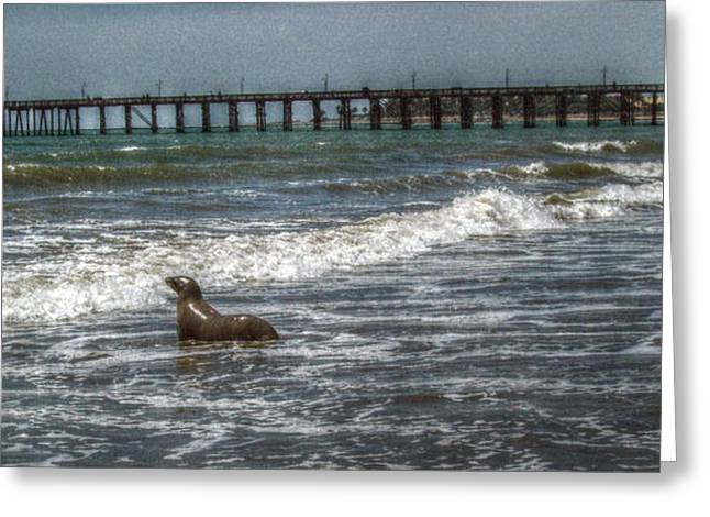 Ventura California Greeting Cards - Out for a Swim Greeting Card by Cindy Nunn