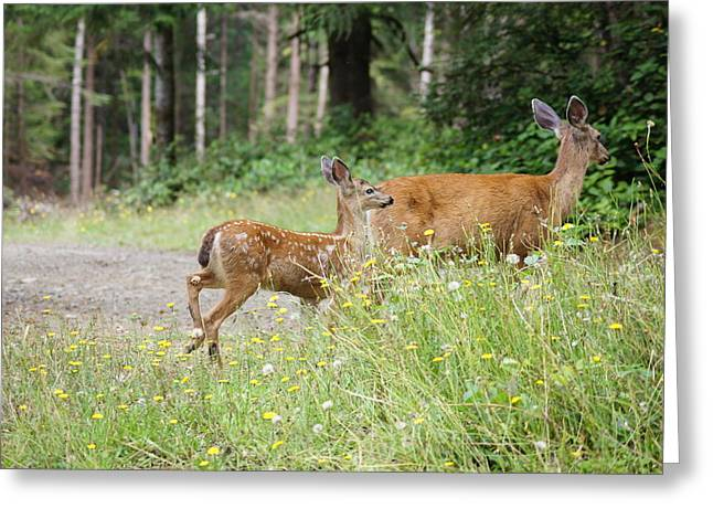 Deer Camp Greeting Cards - Out For a Walk Greeting Card by Angi Parks