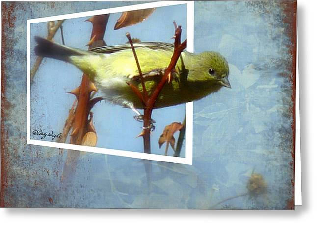 Out Of Bounds Female Goldfinch Greeting Card by Cindy Wright
