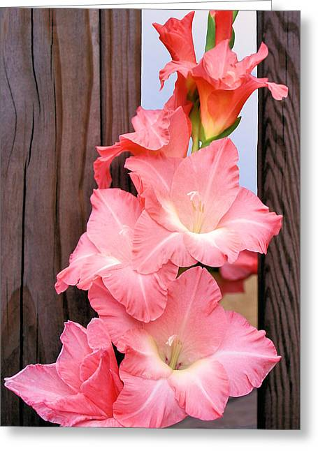 Gladiolas Greeting Cards - Out of Bounds Greeting Card by Kristin Elmquist