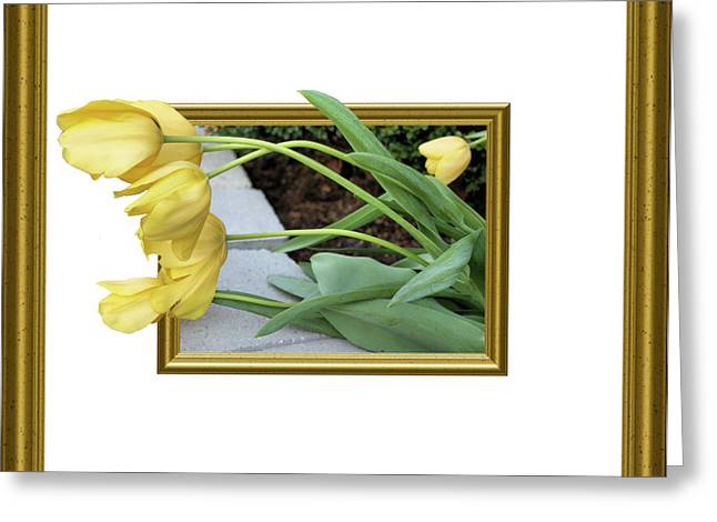 Spring Bulbs Greeting Cards - Out of Frame Yellow Tulips Greeting Card by Kristin Elmquist