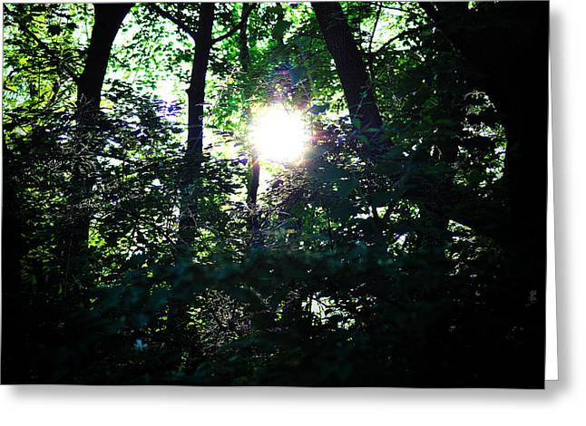 Out Of The Woods Greeting Cards - Out of the Darkness Greeting Card by Bill Cannon