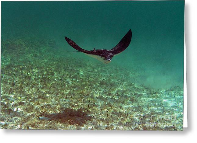 Undersea Photography Greeting Cards - Out of the Deep Greeting Card by Li Newton