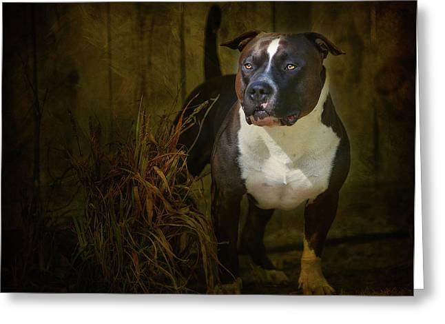 Dog Photographs Greeting Cards - Out of the Shadows Greeting Card by Larry Marshall