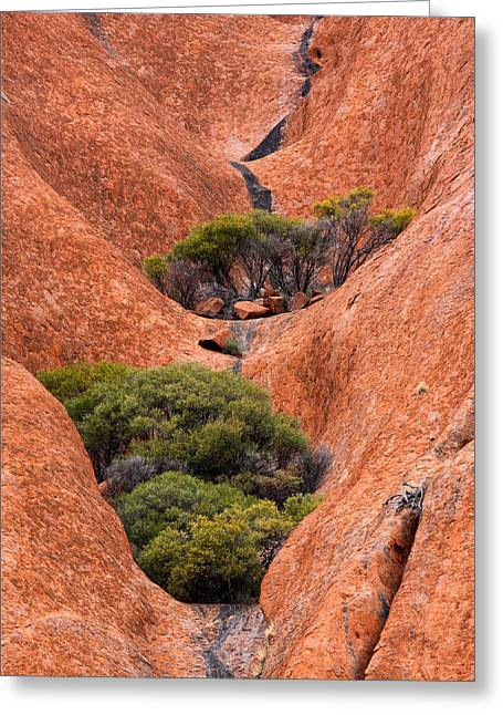 Oasis Greeting Cards - Outback Oasis Greeting Card by Mike  Dawson