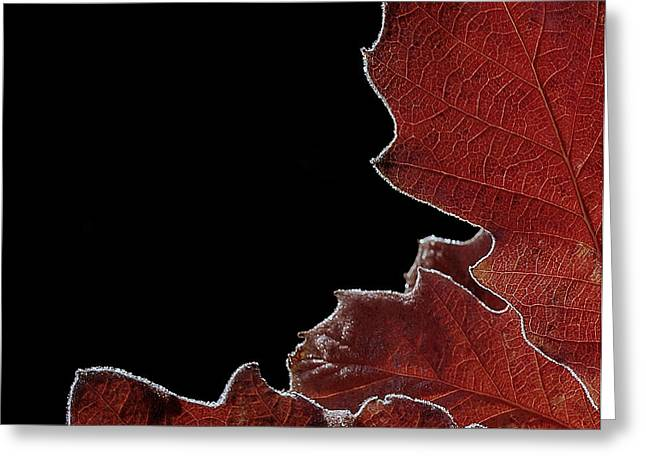 Subtle Colors Greeting Cards - Outlines Of Autumn Greeting Card by Steven Milner