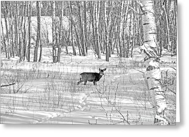 Does. Winter Greeting Cards - Outstanding In Her Field Greeting Card by Al Bourassa