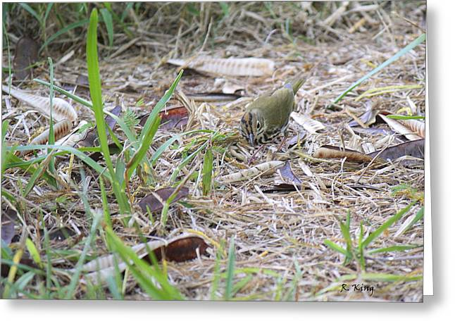 Wildlife Genre Greeting Cards - Oven Bird Walking Around Greeting Card by Roena King