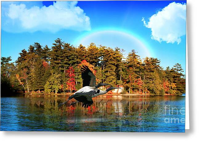 Mallards Greeting Cards - Over The Rainbow Greeting Card by Mark Ashkenazi