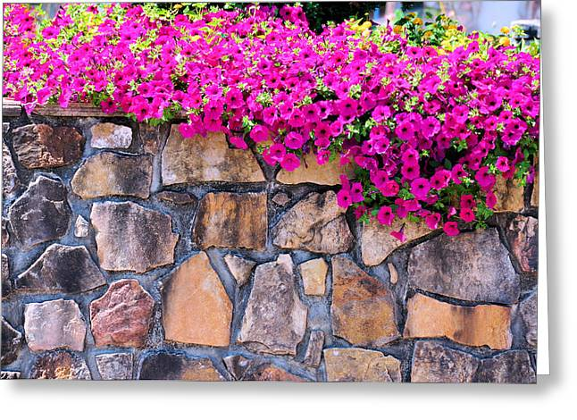 Fushia Greeting Cards - Over The Wall Greeting Card by Jan Amiss Photography