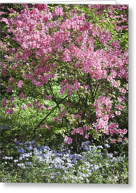 Wildfowers Greeting Cards - Overgrown Natural Beauty Greeting Card by Teresa Mucha