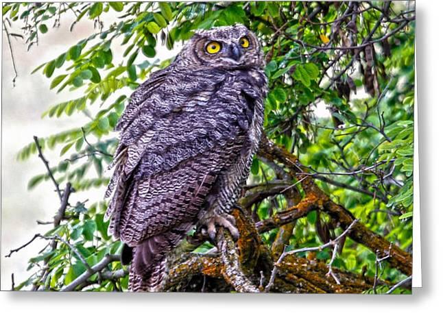 Owl In A Tree Greeting Card by Athena Mckinzie