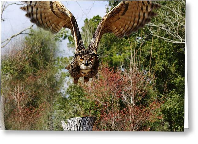 Owl In Flight Greeting Card by Paulette Thomas