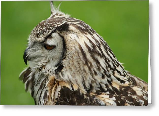Lovely Owl Greeting Cards - Owl Greeting Card by Kevin Alder