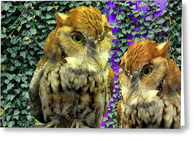 Owl Look Greeting Card by Lynda Lehmann