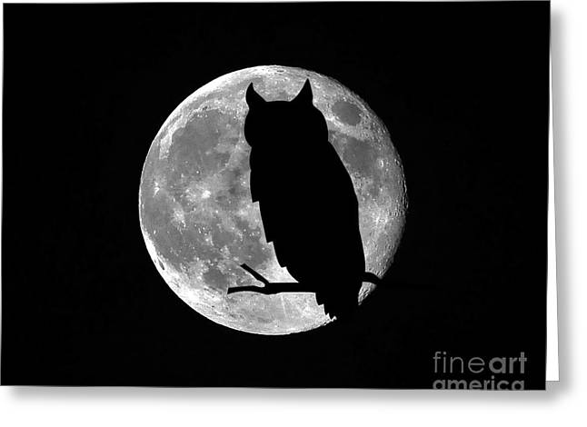 Hallows Greeting Cards - Owl Moon Greeting Card by Al Powell Photography USA