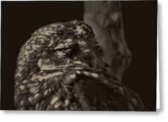 Different Owl Greeting Cards - Owl Nights Greeting Card by Debra     Vatalaro