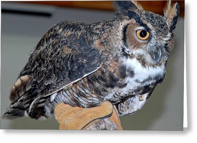 Owl together now Greeting Card by LeeAnn McLaneGoetz McLaneGoetzStudioLLCcom