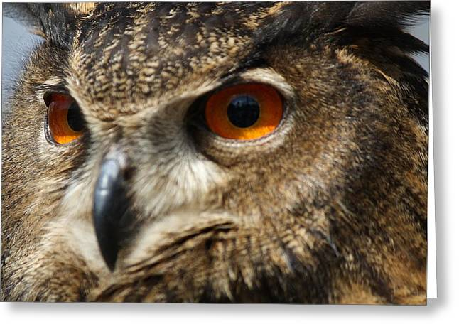 Paulette Thomas Photography Greeting Cards - Owl Up Close Greeting Card by Paulette Thomas