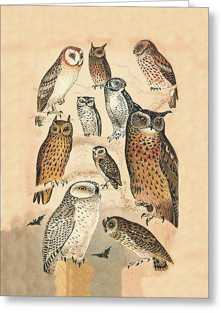 Eric Kempson Greeting Cards - Owls Greeting Card by Eric Kempson