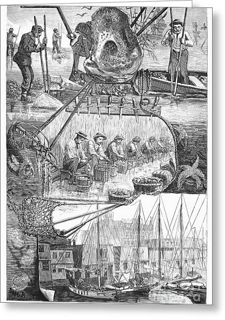 Seasons.net Greeting Cards - Oyster Season, 1882 Greeting Card by Granger
