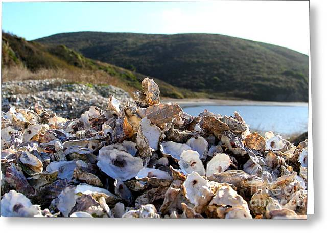 Marin County Greeting Cards - Oyster Shell Hill at Drakes Bay Oyster Company in Point Reyes California . 7D9849 Greeting Card by Wingsdomain Art and Photography