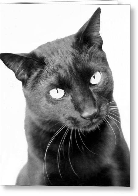 Black Cat Greeting Cards - Pablo  Greeting Card by Heather S Huston